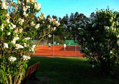 uthc-tennisanlage-blick-auf-trainerplatz-sommer