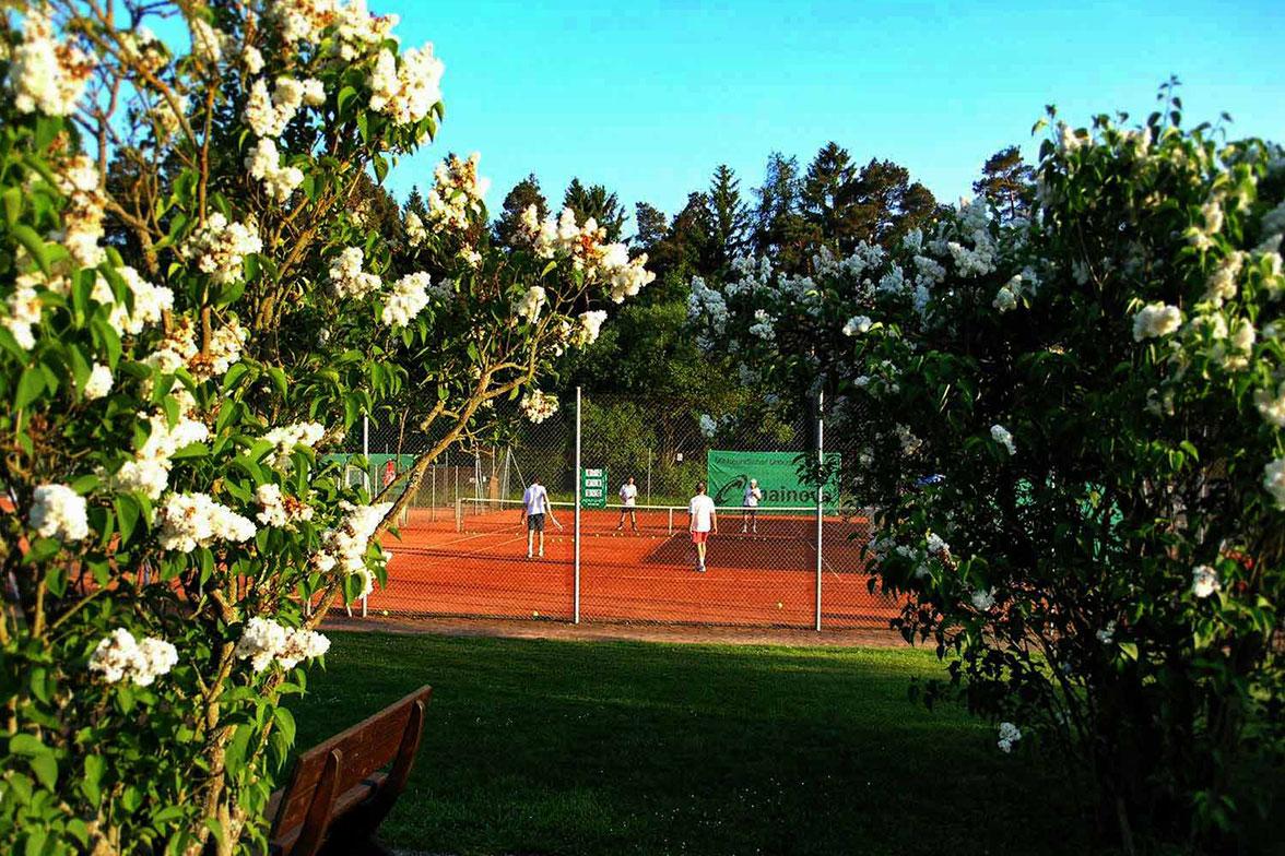 UTHC-Tennis-Campus-Tennisplatz-Flieder